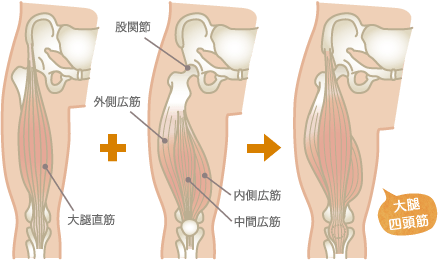 大腿四頭筋(腱)炎の原因