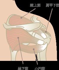 野球肩の原因筋